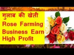 गुलाब की खेती  Rose Farming Business Earn high profit