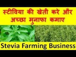 स्टीविया की खेती करे और अच्छा मुनाफा कमाए  Stevia Farming Business