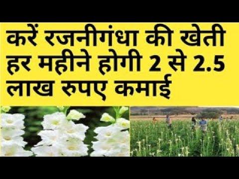 रजनीगंधा की खेती करे हर महीने होगी 2 से 2 5 रुपए कमाई Rajnigandha ( tuberosa) Farming Business