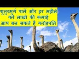 शुतुरमुर्ग पालें और हर महीने करे लाखो की कमाई आप बन सकते है करोड़पति Ostrich Farming Business