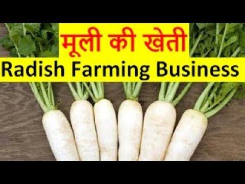 मूली की खेती radish farming business, radish cultivation, Muli ki kheti kaise kare