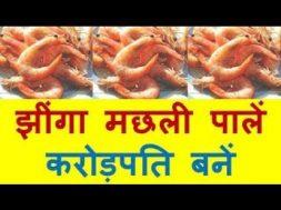 झींगा मछली पालें करोड़पति बनें   Profitable Prawn culture