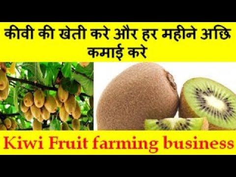 कीवी की  खेती करे और हर महीने अछि कमाई करे  Kiwi Fruit farming business