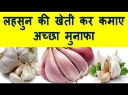 लहसुन की खेती कर कमाए अच्छा मुनाफा How To Start Garlic Farming
