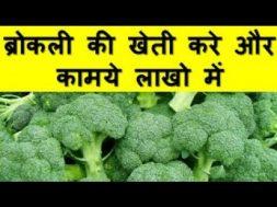 ब्रोकली की खेती करे और कामये लाखो में Broccoli Farming Business