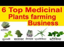 6 Top Medicinal plants farming Business औषधीय फसलो की खेती करने से किसानों को होगा ज्यादा benefit