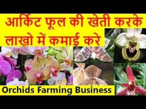 आर्किट फूल की खेती करके लाखो में कमाई करे  Orchids Flower Farming Business
