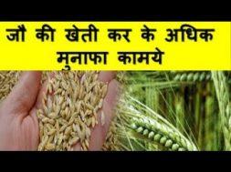 जौ की खेती कर के अधिक मुनाफा कामये Barley farming