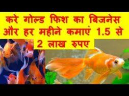 करे गोल्ड फिश का बिजनेस और हर महीने कमाएं 1 5 से 2 लाख रुपए Goldfish farming business