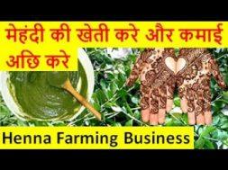 मेहंदी की खेती करे और कमाई अछि करे  Henna (Mehndi)Farming Business
