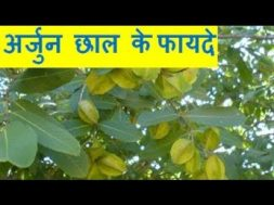 Benefits of Arjun Chaal अर्जुन छाल के फायदे