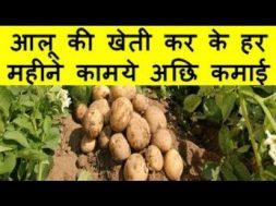 आलू की खेती कर के हर महीने कामये अछि कमाई Potato Farming