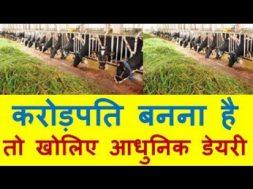 Earn in crores करोड़पति बनना है तो खोलिए आधुनिक डेयरी Dairy Farming Business