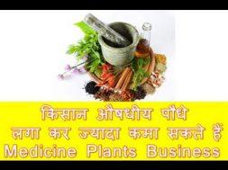 Farmer Can Earn more Income with Medicine Plants किसान औषधीय पौधे लगा कर ज्यादा कमा सकते हैं