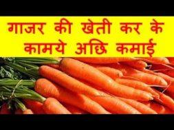 गाजर की खेती कर के कामये अछि कमाई Carrots Farming Business