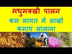मधुमक्खी पालन, कैसे करें शुरुआत   Earn in Lacs Bee Farming Business In India, Bee Honey