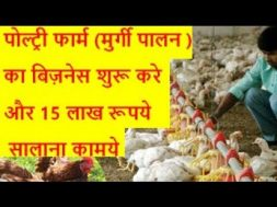 Earn 15 lakh by starting poultry farming business   poultry farming business in india
