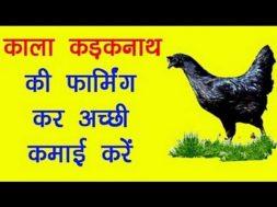 Earn Good money with Kadaknath Murgi   काला कड़कनाथ मुर्गी Farming Business