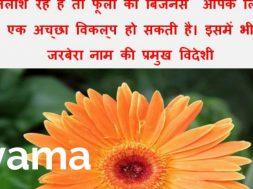 Earn 6 Lakh per year by Flower Business of Gerbera Flower | Shyama tips