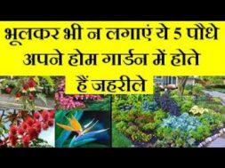 5 plants are dangerous for home garden भूलकर भी न लगाएं ये 5 पौधे अपने होम गार्डन