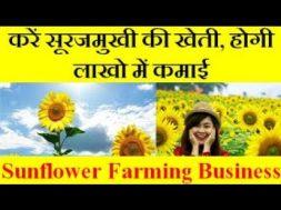 Sunflower Farming Business करें सूरजमुखी की खेती, होगी लाखो में कमाई