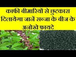 Basil (Sabja) seeds benefits काफी बीमारियों से छुटकारा दिलायेगा जानें सब्जा के बीज के अनोखे फायदे