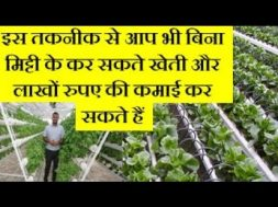 Hydroponic Farming – Hydroponic Soil-less Farming Business idea In Hindi