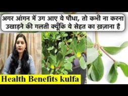 Amazing Health Benefits of the Kulfa (Common Purslane )