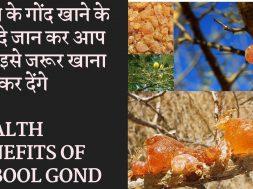 Health Benefits Of Babool Gond | बबूल की गौंद के फायदे जानकर चोक जाएगे