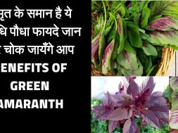 Benefits of green amaranth | Chaulai khane ke fayde |   Amazing Benefits of green vegies