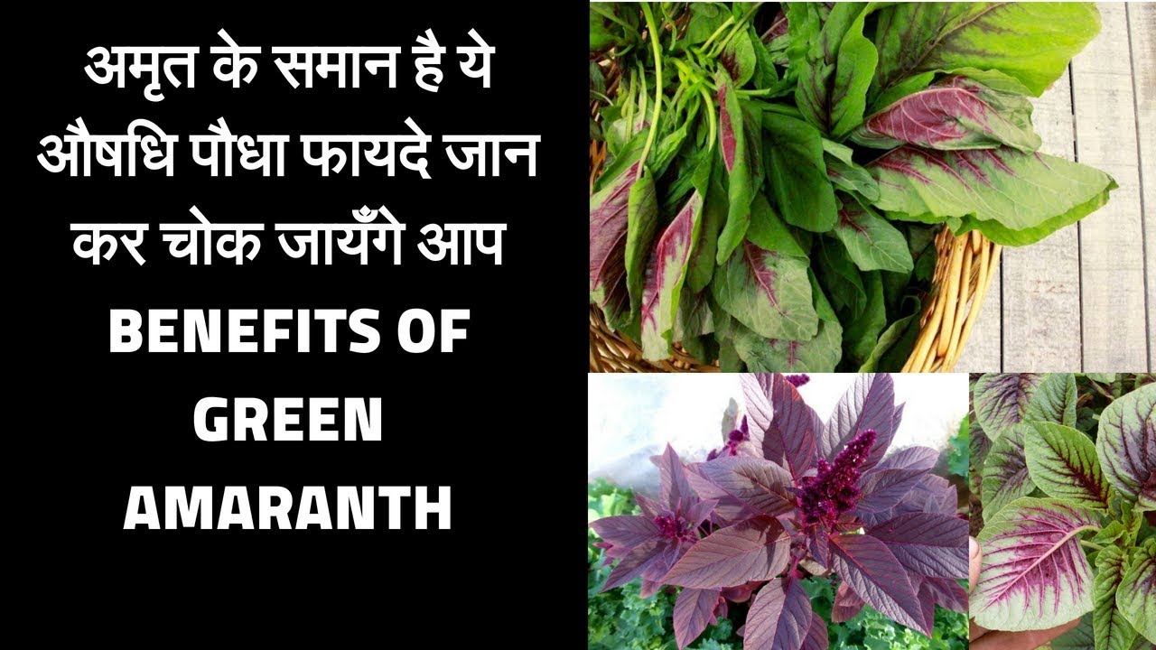 Benefits of green amaranth | Chaulai khane ke fayde |   Amazing Benefits of green vegies