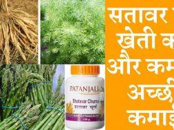 Shatavari Farming business a profitable business सतावर की खेती कैसे करें