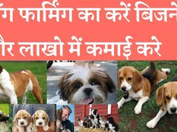 Start dog farming with low investment and earn good income डॉग फार्मिंग का करें बिजनेस होगी अच्छी कम