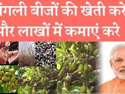 Farming of forest seed can give earning opportunity  जंगली बीजों की खेती करे और लाखों में कमाएं