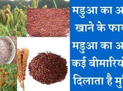 Finger Millet (Ragi) health benefits क्वादु/रागी/ मडुआ का आटा नहीं है किसी दवा से कम