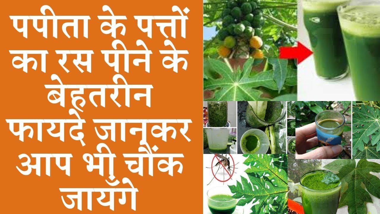 Benefits of drinking papaya leaves juice पपीते के पत्ते का रस पीने के फायदे