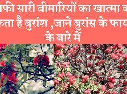 Health benefits of Burans (Rhododendron) flower बुरांस का फूल सेहत के लिए लाभदायक
