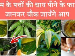 Health benefits of mango leaves tea  | आम के पत्तों की चाय पीने के फायदे