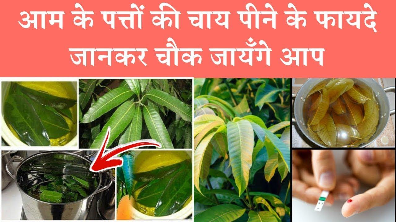 Health benefits of mango leaves tea    आम के पत्तों की चाय पीने के फायदे