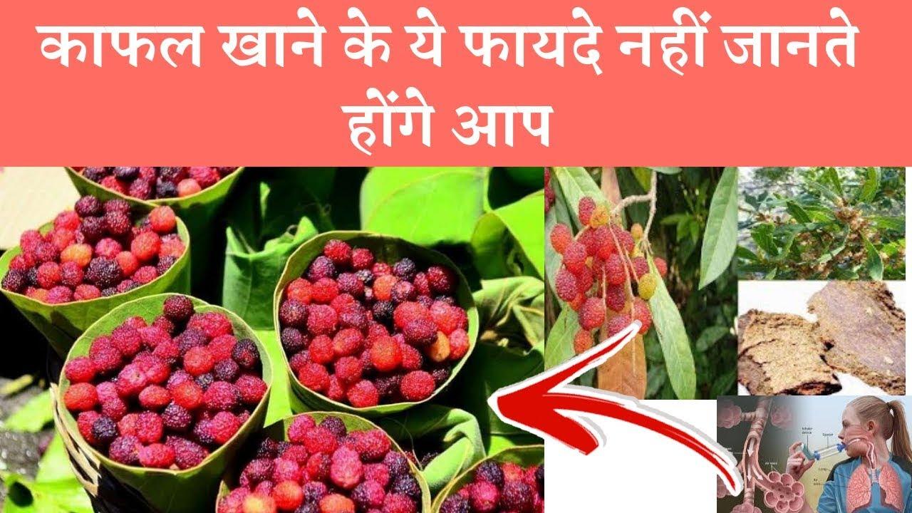 Health Benefits Of Kafal fruits [Myrica esculenta]  काफल खाने के ये फायदे