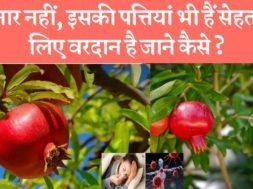 अनार की पत्तियां कैसे हमारी सेहत के लिए फायदेमंद है☺️ Health benefits of pomegranate leaves