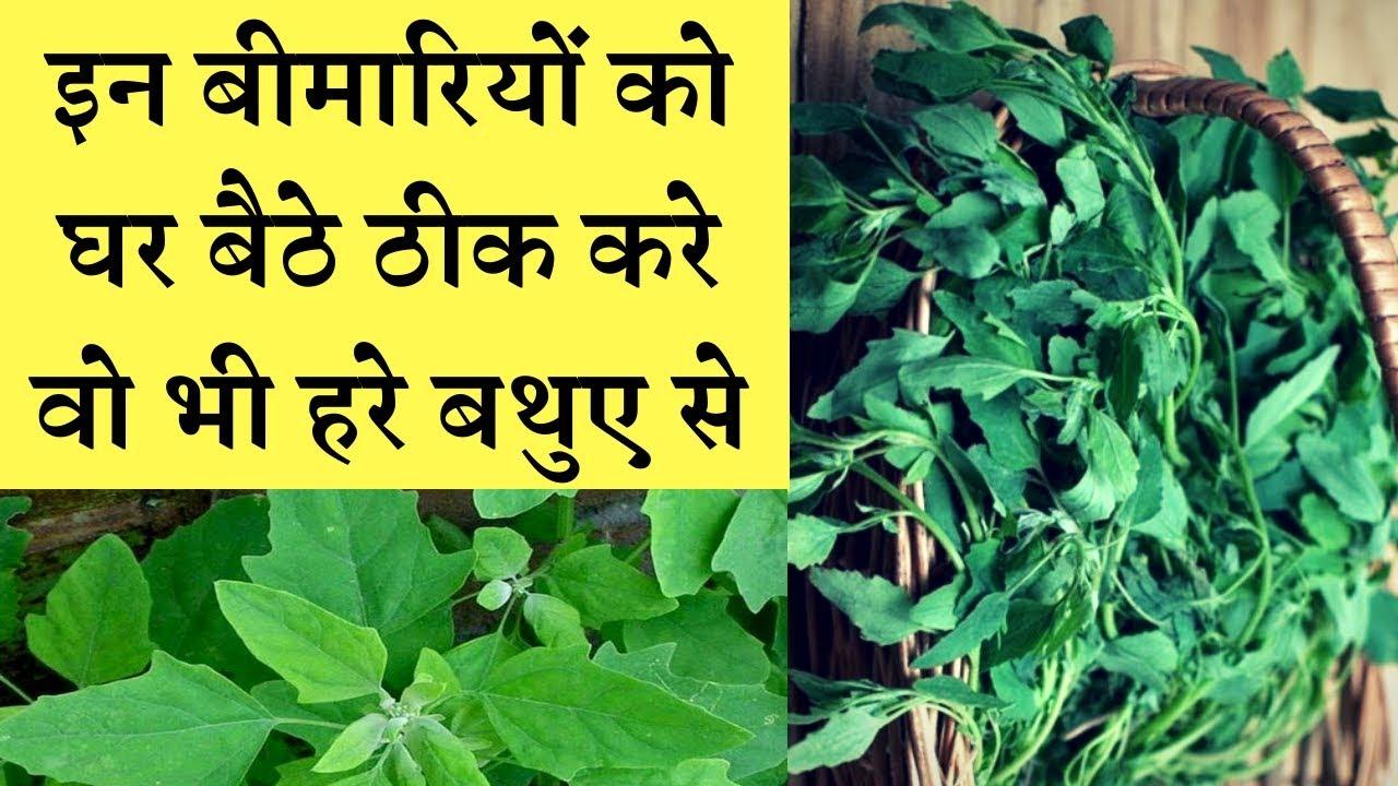 pigweed benefits || बथुआ बड़ी बड़ी बीमारियों का इलाज है #Chenopodiumalbum