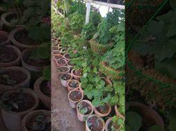 company garden nursery view Mussoorie Uttarakhand