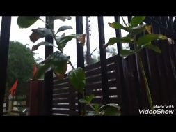 Our Little Entrance Garden Overview During MAY Rain  | Shyama Tips