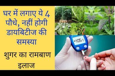 Plants that helps to control diabetes || ये 4 पौधे करंगे आपके डायबिटीज की समस्या को जड़ से खतम